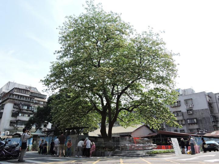 images on organization : 臺北市立美術館